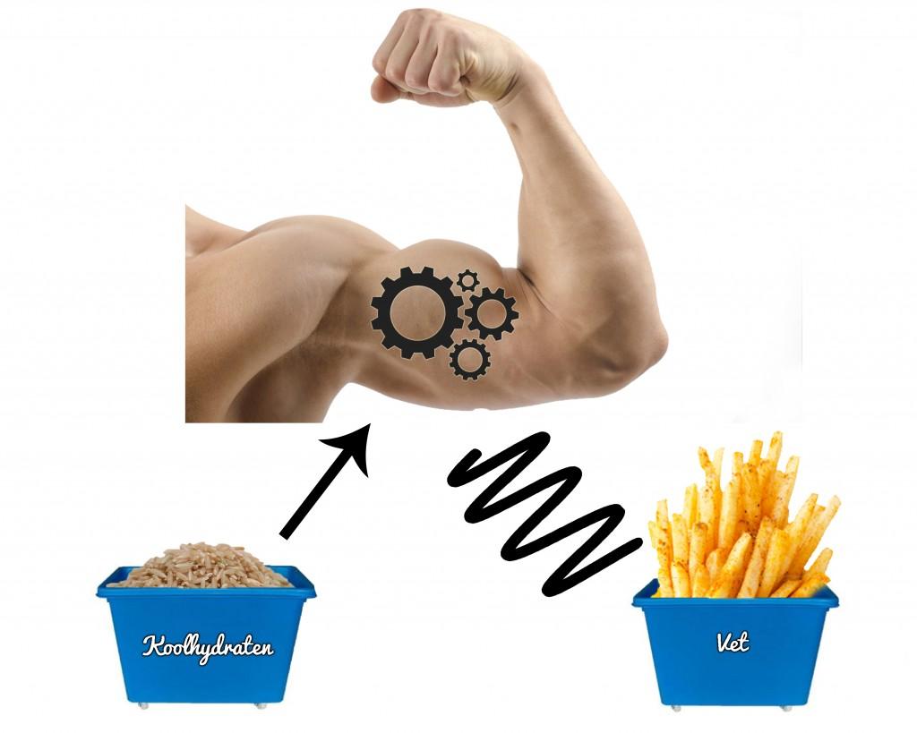 We willen onze spieren zoveel mogelijk vet laten verbranden