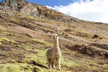 Peru reis